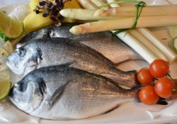 ryby a jejich dopad na zdraví