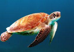 Chov vodní želvy