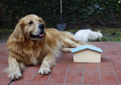 Stříhání psa