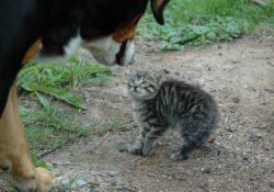 Stres koček