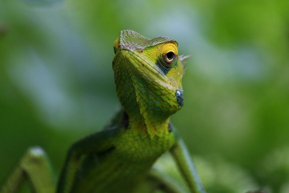 Tipy na chov chameleona