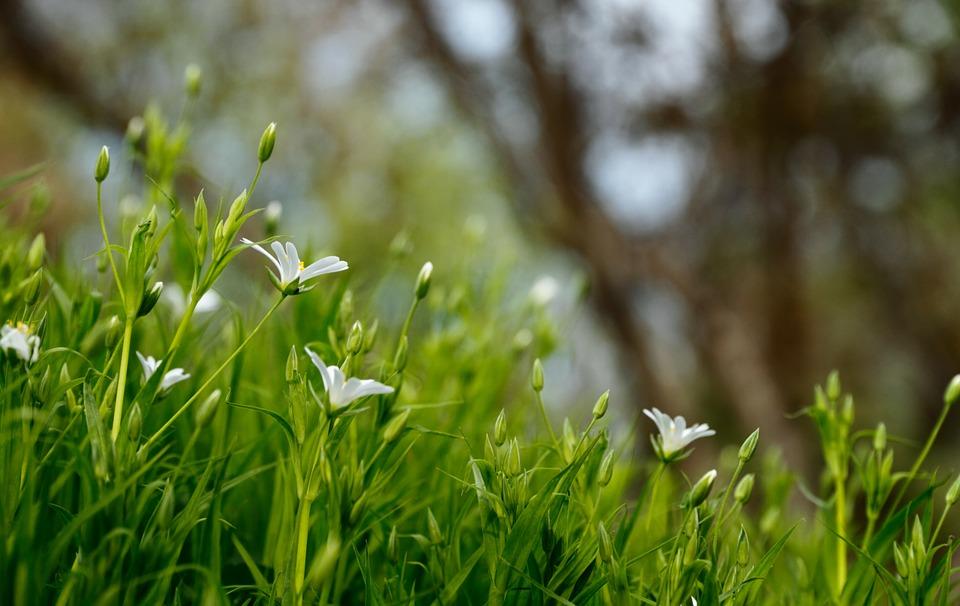 Zazimování trávníku