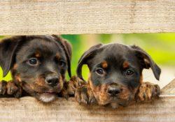 Jaká onemocnění trápí psí mazlíčky nejčastěji?