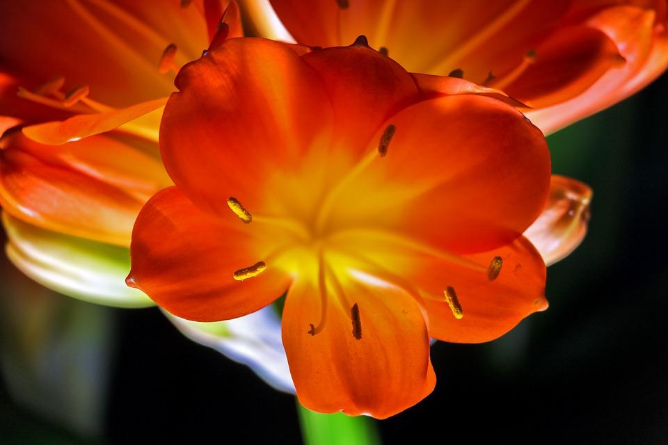 Na jaké pokojové rostliny si dát raději pozor?
