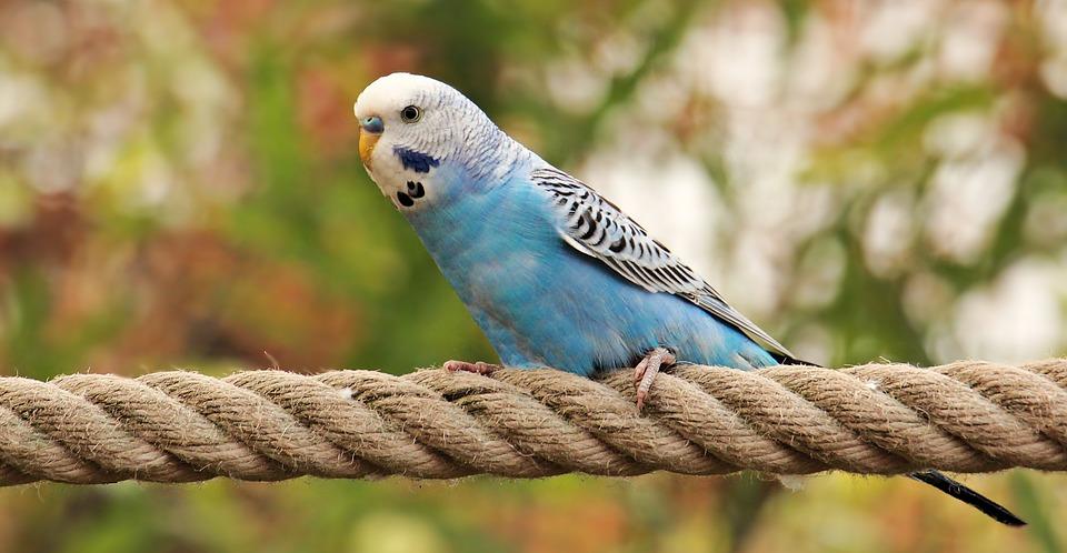 Chov ptactva jako stále oblíbenější koníček. Budete chovat holuby nebo andulky i vy?