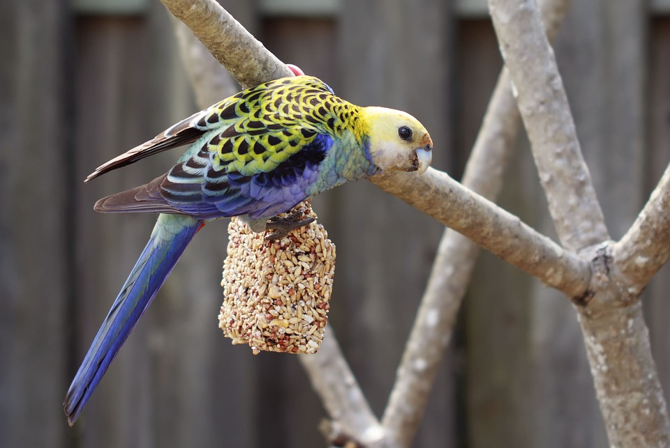 Postavte si vlastní voliéru pro ptactvo