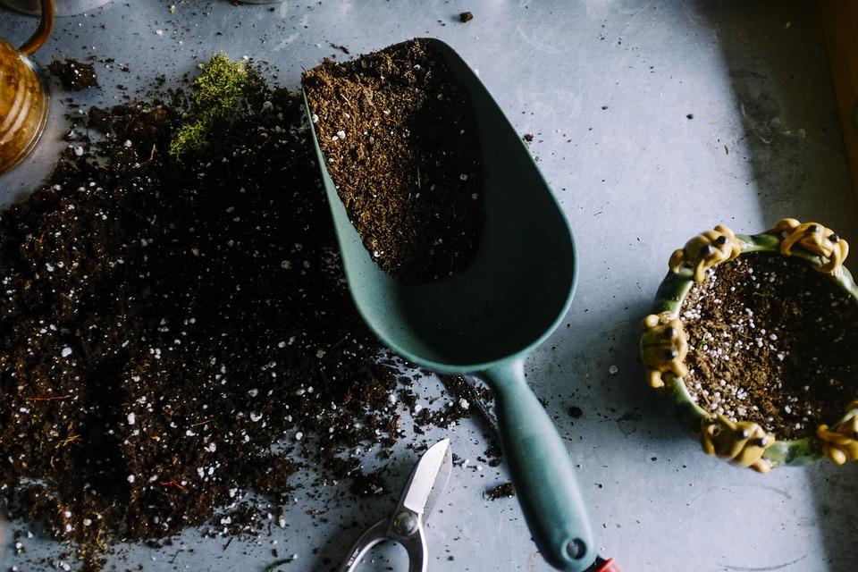 Čím přihnojit rostliny, aby plodily vynikající zeleninu?